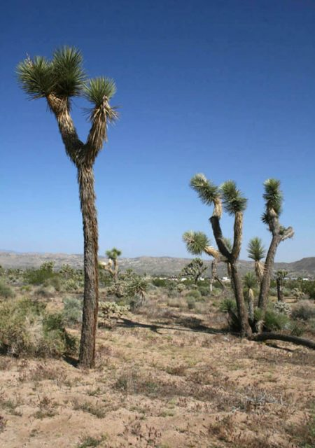 See Need Want Travel Guide To Palm Springs Joshua Tree National Park 1